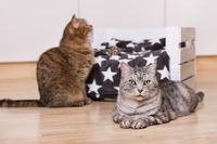 Zwei Katzen im Wohnzimmer