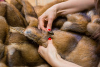 Tailor sewing button of fur coat