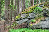 Rocks shaped like a dragonhead