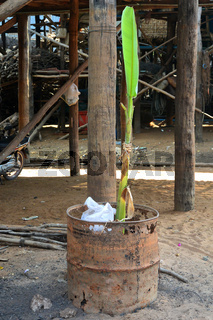 a green banana plant in a garbage barrel
