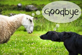 Dog Meets Sheep, English Text Goodbye, Norway