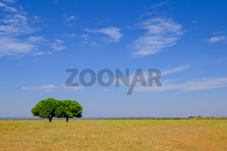 Beautiful Pantanal landscape with two nice trees, Bom Jardim Nobres, Mato Grosso, Brazil, South America