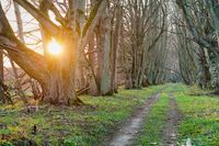 forest path among old trees, sunset in the forest, sunlight through the alley