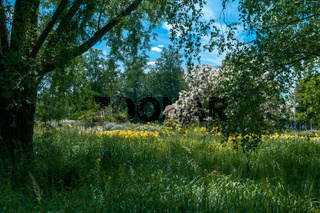 scenic summer landscape under a tree with blooming yellow flowers