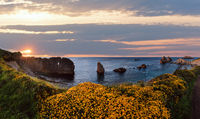 Blossoming Arnia Beach evening coastline landscape.