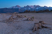 Tree stump in dry lake Forggensee after sunset with a view to Fuessen