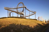 DU_Tiger and Turtle_74.tif