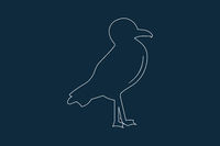 Seagull Icon Vector