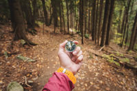 A beautiful male hand with a yellow watch strap holds a magnetic compass in the coniferous autumn forest. The concept of finding yourself the way and truth