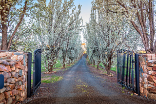 Entrance of tree lined drive way in full flower