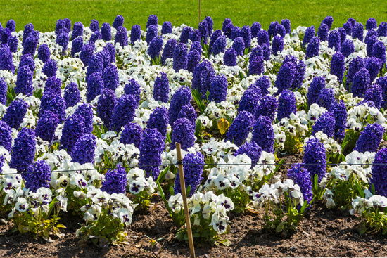 Beautiful Colorful Purple Flowers Garden City Landscaping