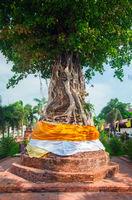 Tree covers ancient pagodas at Wat Na Phra Men