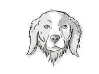 Brittany or Brittany Spaniel Dog Breed Cartoon Retro Drawing