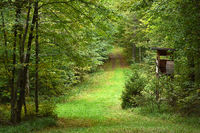 Forest path in autumn with hunting lodge