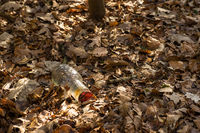 glass bottle, garbage thrown into the forest's leaf-covered bottom