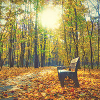 Autumn park -  Bench and yellow maple trees