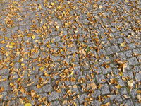 Autumn leaves on paving stones