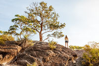 Back view of a woman under grand old tree at mountain cliff lookout