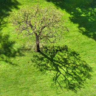 Tree with abstract shadow on grass