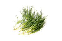 Organic Fennel Herb, isolated and with copyspace