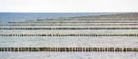 rows of wooden breakwater stakes at the Baltic sea