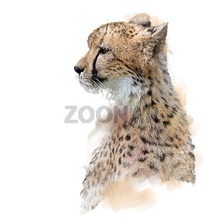 Cheetah Portrait watercolor on white background