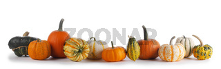 Many Pumpkins on white background