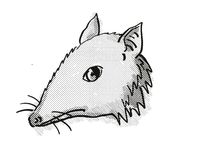 Long-Nosed Bandicoot Endangered Wildlife Cartoon Retro Drawing