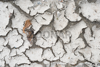 Two dry leaves on a dry ground