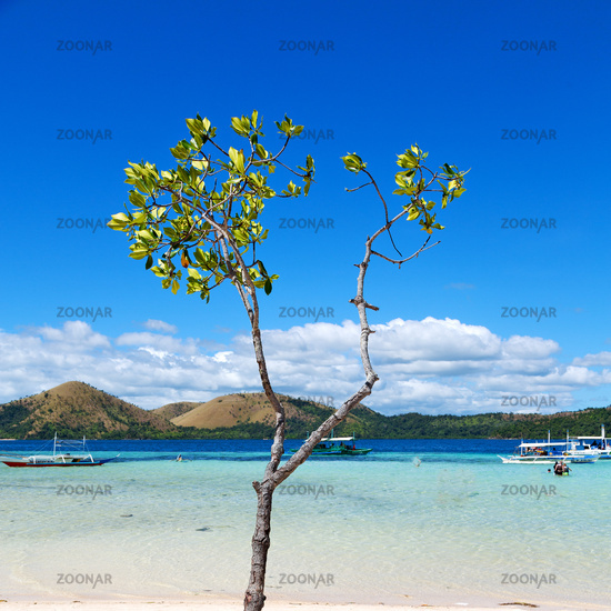 in the beautiful  island cosatline and tree
