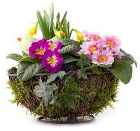 Blumenschale mit Frühlingsblumen und Moos