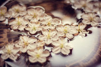 Cherry tree flowers. small white flowers. beautiful flowers