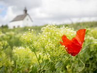 Poppy on a meadow with chapel in the background