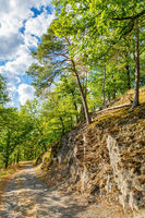 Walkway along rock with trees in german forest