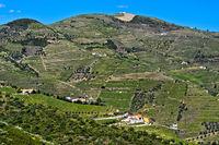 Vineyards in the port wine region Alto Douro near Pinhao, Douro Valley, Portugal