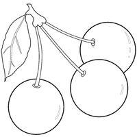 Outlines of three cherries