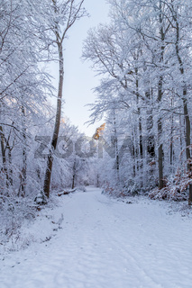 Snow covered road through a snowy forest on a winter morning, with the first sunlight touching the treetops.