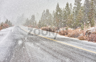 Snowstorm beginning in Yosemite National Park. Wet snowy road.