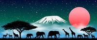 African animals at night