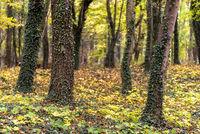 follage in autumn in Europe