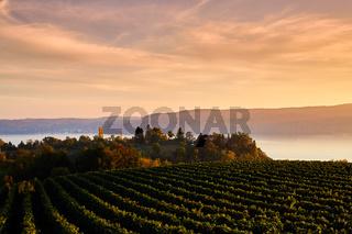 Blick über einen Weinhang auf den Bodensee