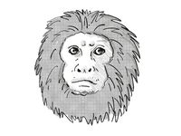 Golden Lion Tamarin or Leontopithecus Rosalia Endangered Wildlife Cartoon Retro Drawing