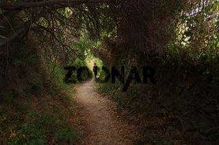 Wanderweg - Ligurien - Italien