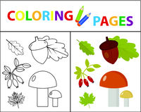 Coloring book page for kids. Forest set. Sketch outline and color version. Childrens education. Vector illustration.
