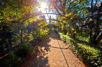 Florence italian garden green tunnel walkway at sun haze