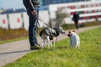 Mann mit Hunden