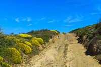 Dirt road with blossoming Genista cushions, Algarve, Portugal