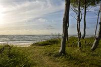 baltic coast Darss-Forest