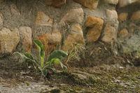 Masonry and plant