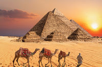 Bedouin with camels in the sunset desert in front of the famous Pyramids of Giza
